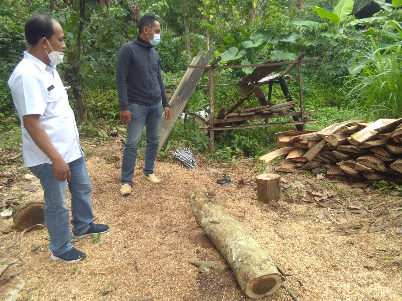 Petugas perlihatkan beberapa potong kayu gelondongan yang telah ditebang para pelaku ilegal loging
