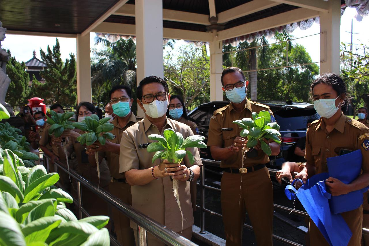 Sekda Adi Arnawa saat melakukan panen perdana sayuran Hidroponik berupa Sayur Pokcoy di lobi Kantor Dinas Pertanian dan Pangan Kabupaten Badung, Senin (3/5).